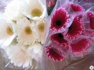 The gerbera cups are available for mini, standard and giant gerberas.