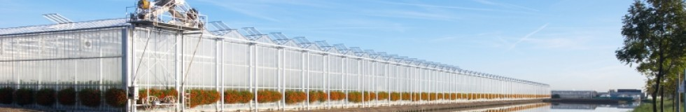 Dutch greenhouse projects